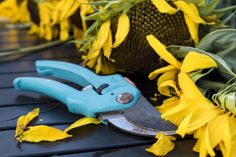 секатор и растения в саду