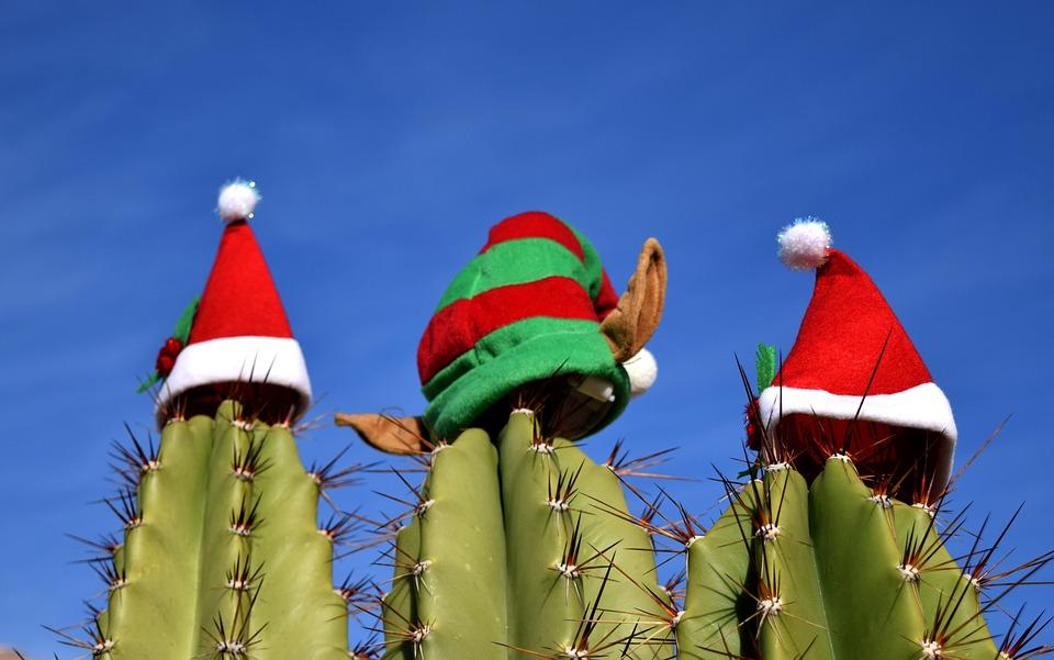 шапочки Санты на кактусах