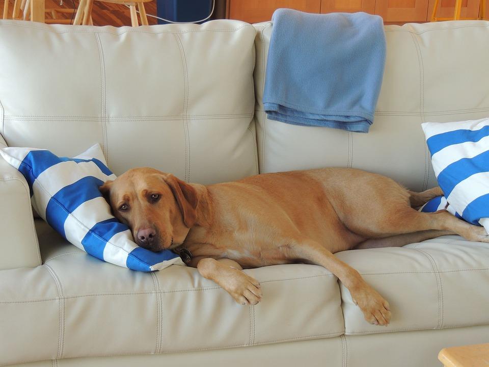 собака лежит на подушке на диване
