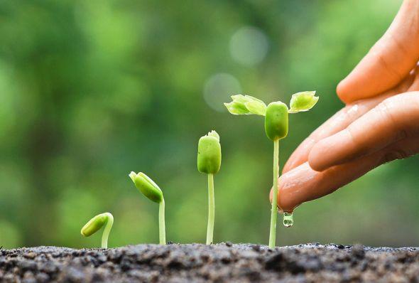 Чем «кормить» рассаду