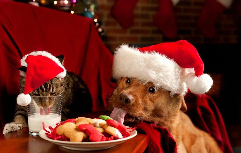 собаки,кошки, новый год,корм,шампанское,оливье,икра, здоровье животных