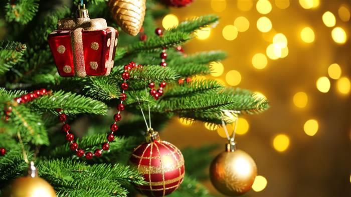 елка,новый год, зеленая красавица
