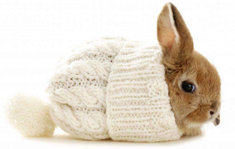 зима,холод,кролик, как согреться