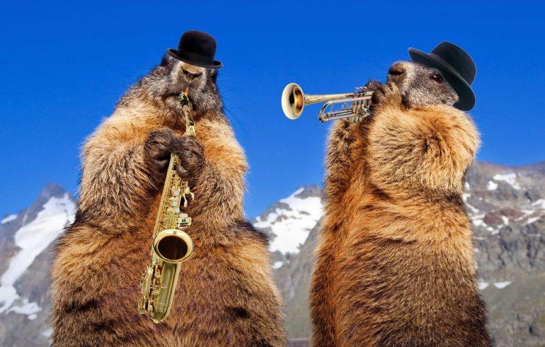 веселые сурки,музыканты