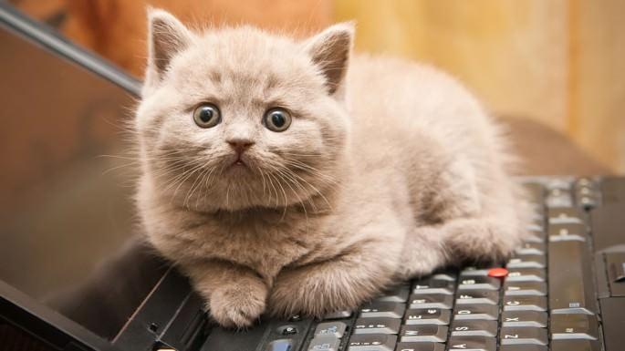 кот,компьютер