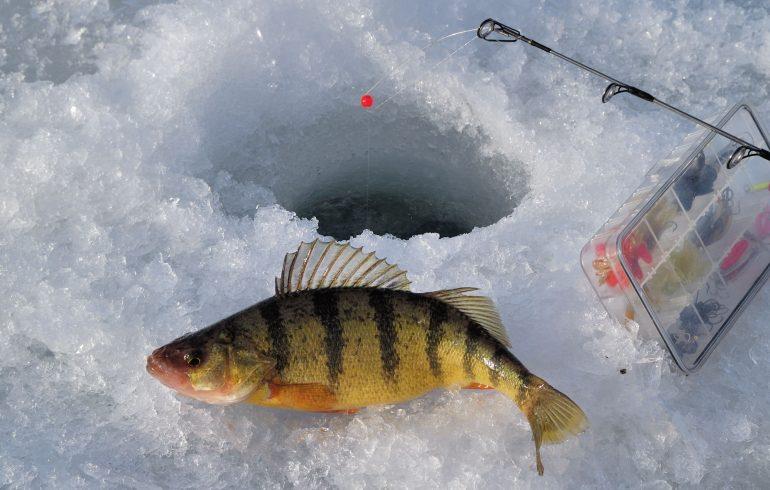 ерш, лед,рыбалка