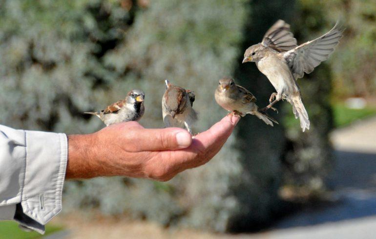 птички на ладони