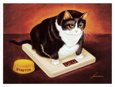 кошки, весы, как взвесить