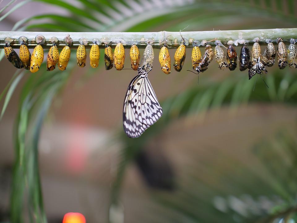 превращение из куколок в бабочек