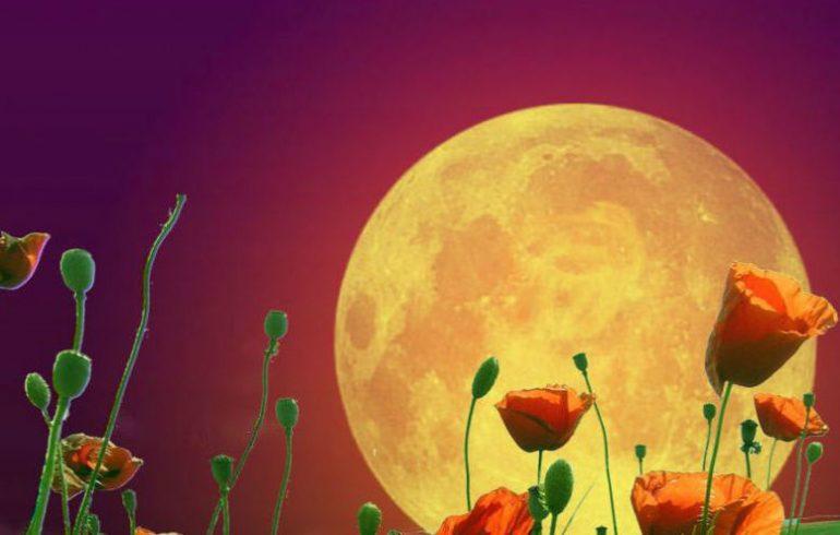 влияние Луны на посадки
