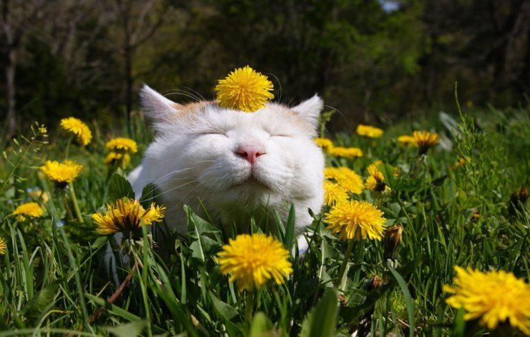 довольный кот в одуванчиках