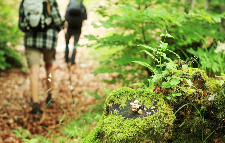 растения в лесу