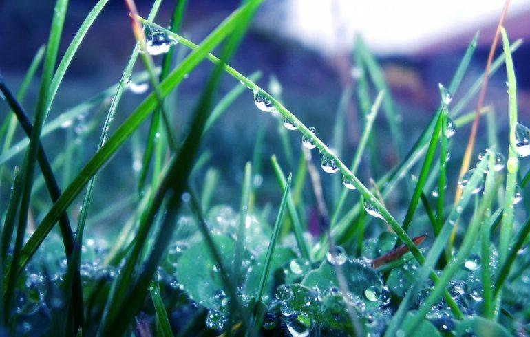 капельки росы на траве