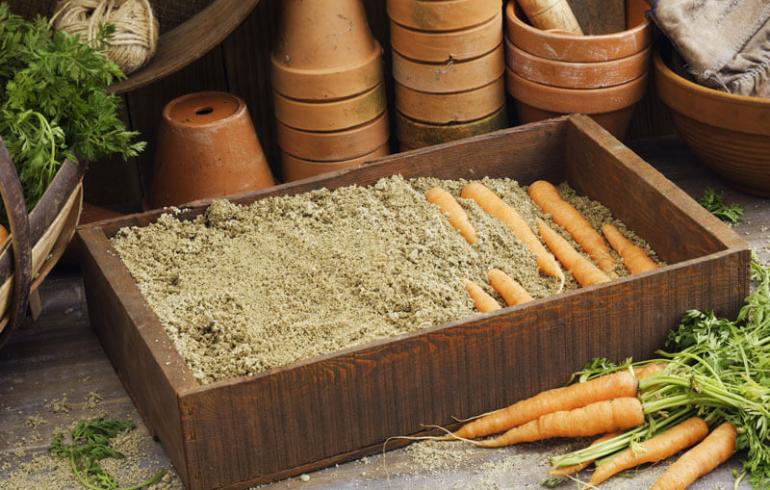 морковка в ящике с песком