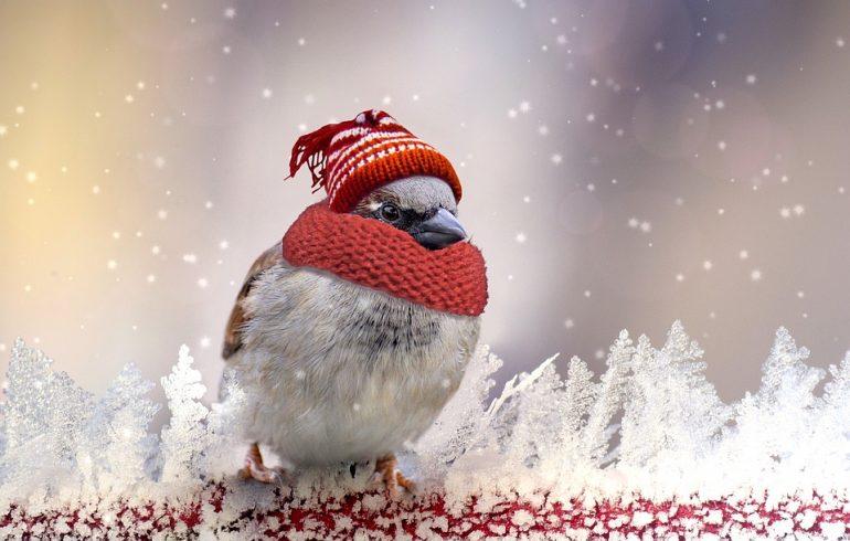 воробей замерз в шапке и шарфе