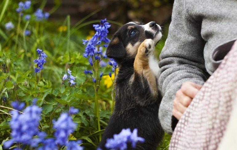 когда делать прививки щенку