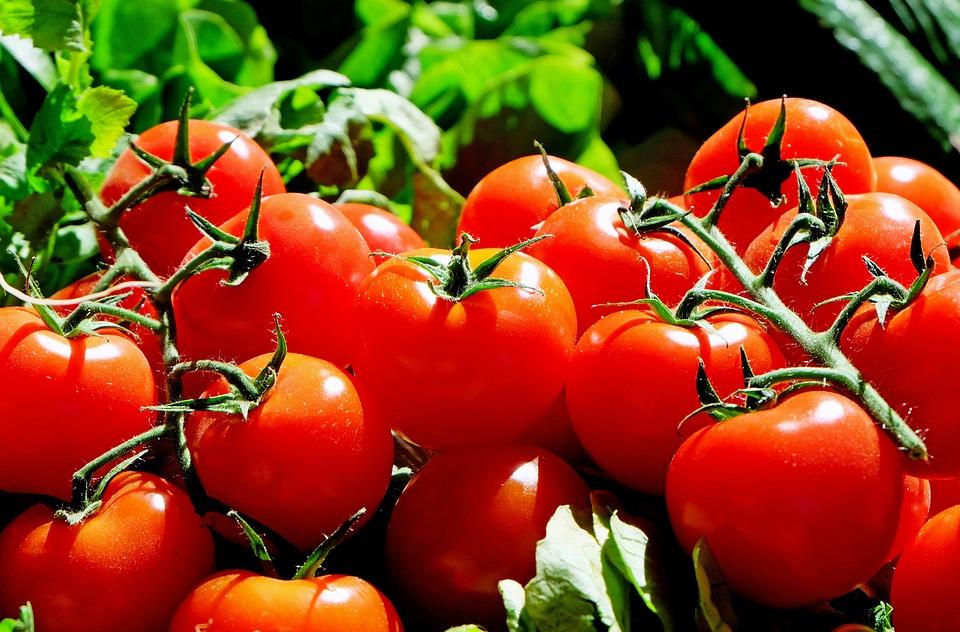 Советы по уходу за помидорами летом