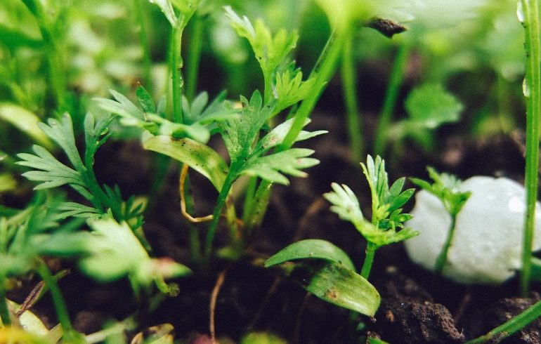 Что посадить в огороде в августе