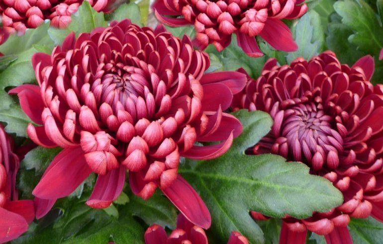 Как ухаживать за цветами осенью