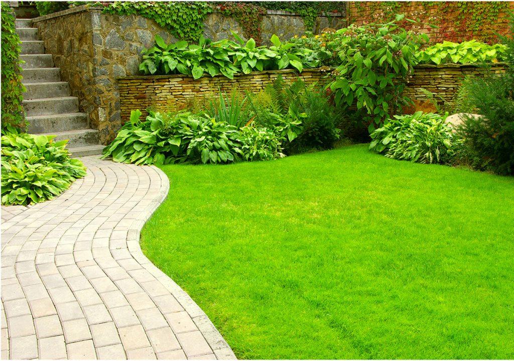 выращиваем газон на дачном участке