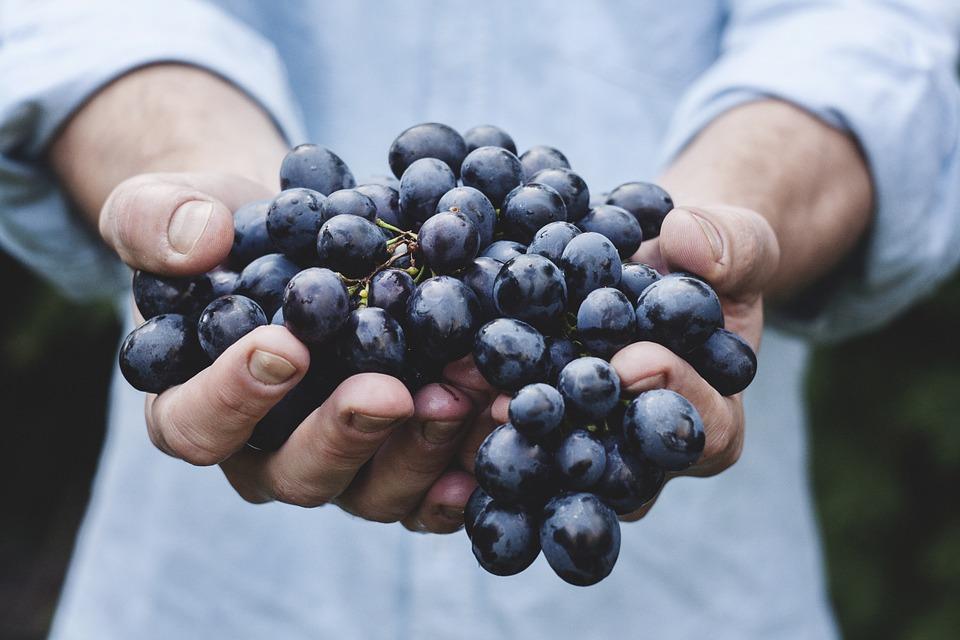 фермер держит в руках кисть винограда