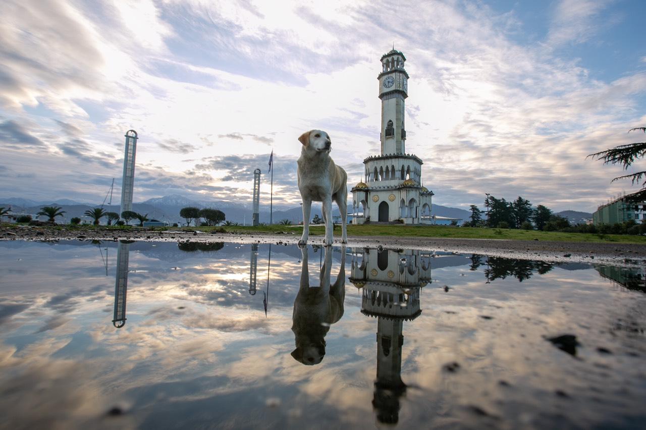 Собака на Батумском бульваре
