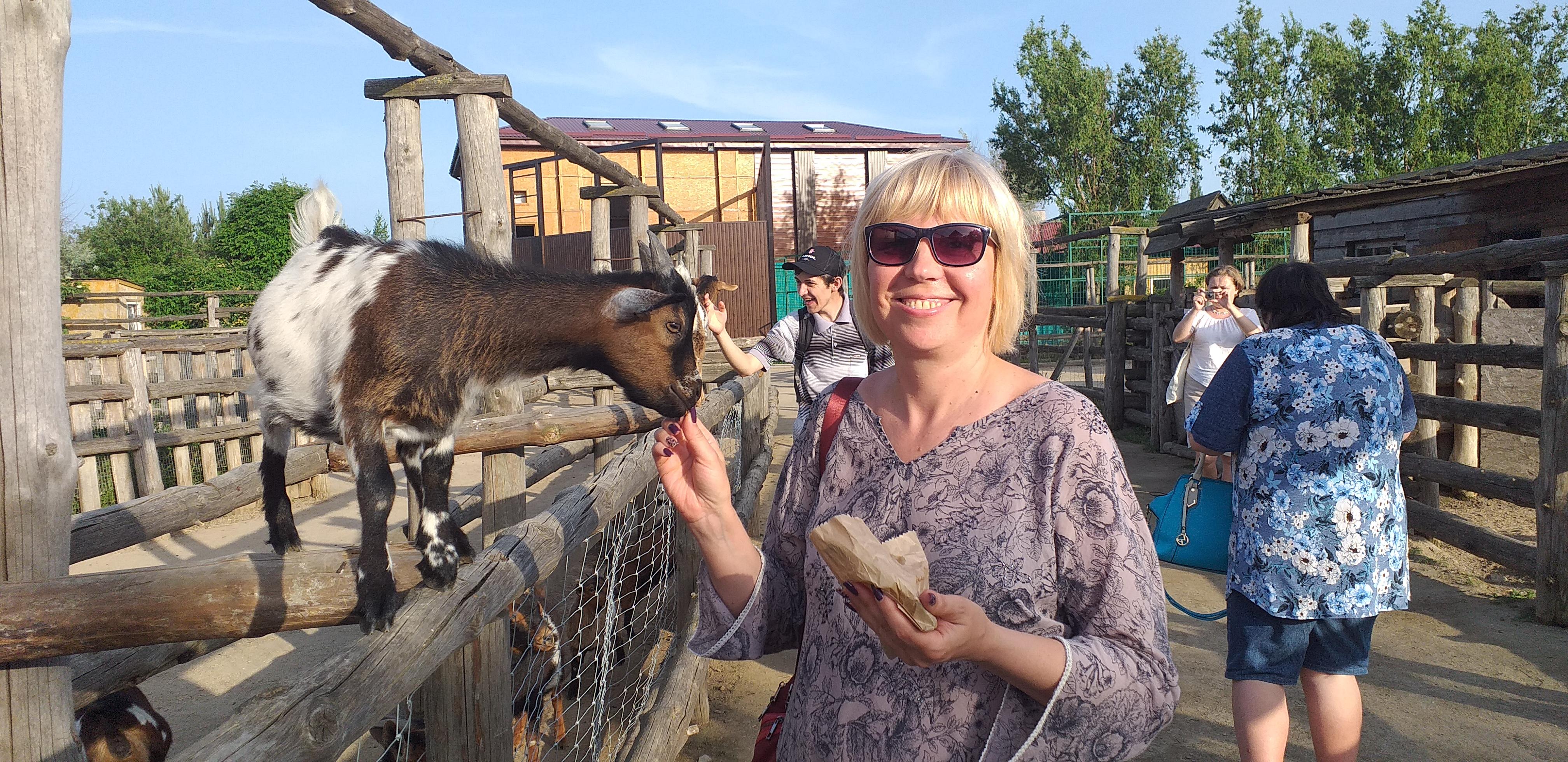 в зоопарке Сафари можно покормить животных