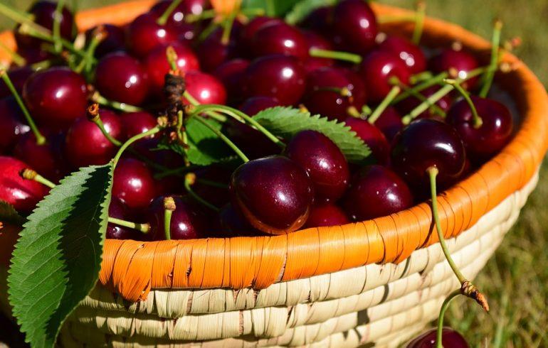 Чем полезна черешня и как ее правильно выбирать
