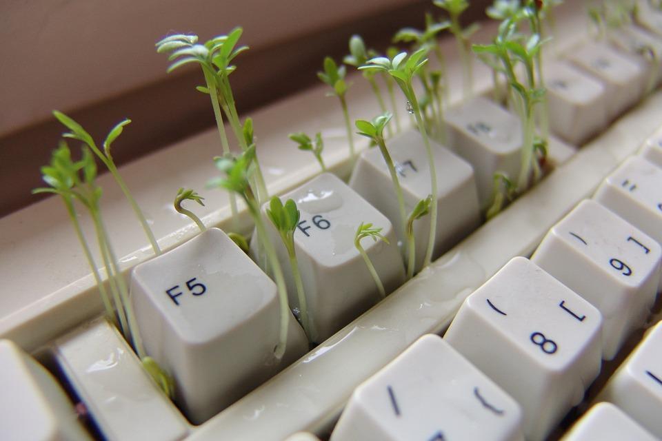 салат на клавиатуре компьютера