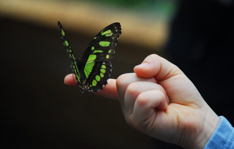 как вырастить дома бабочек