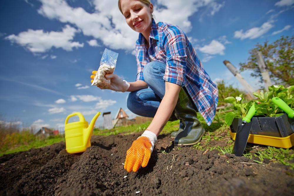 посев семян в почву летом
