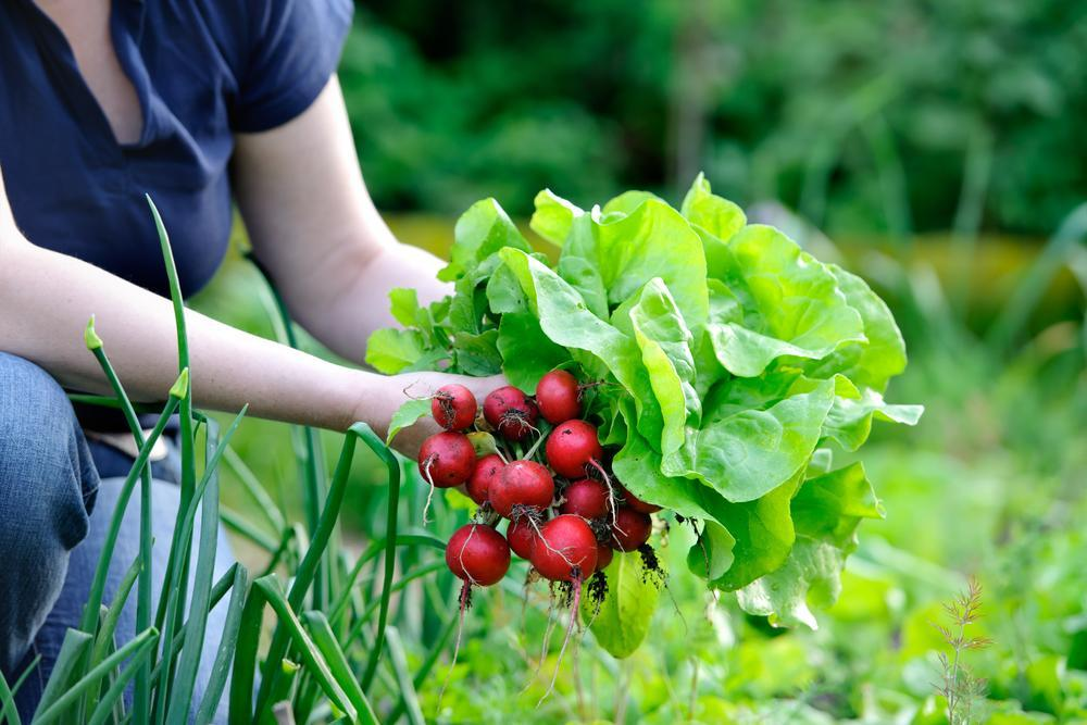 редис и лук можно посеять повторно