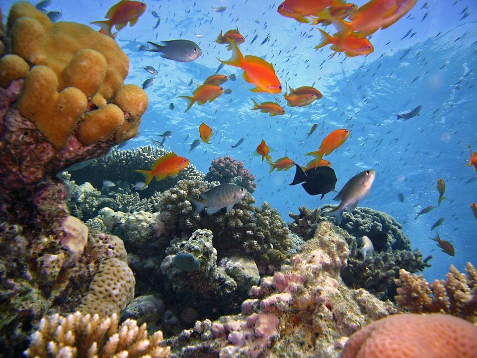 коралловый риф в море и рыбы