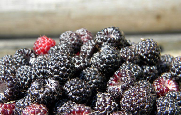 Как размножать черноплодную малину