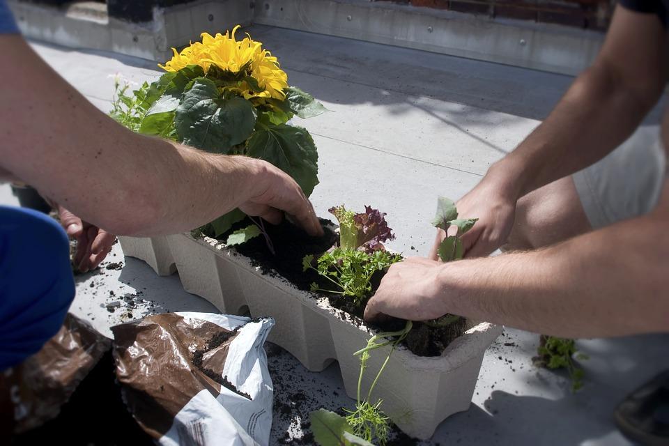 посадка цветов в контейнер
