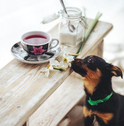 Чай, выручай: его можно не только пить