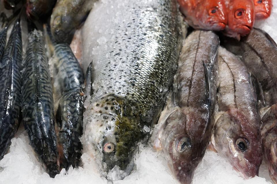 рыба на прилавке в магазине