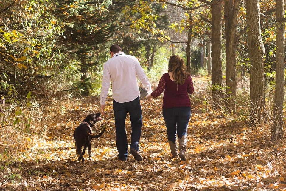 семья с собакой гуляют осенью