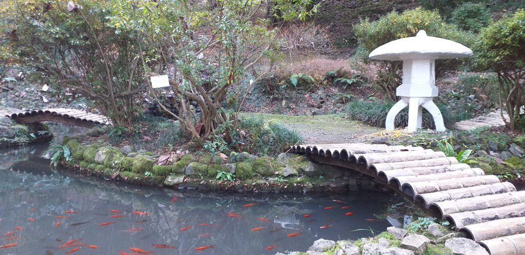 пруд в ботаническом саду Батуми