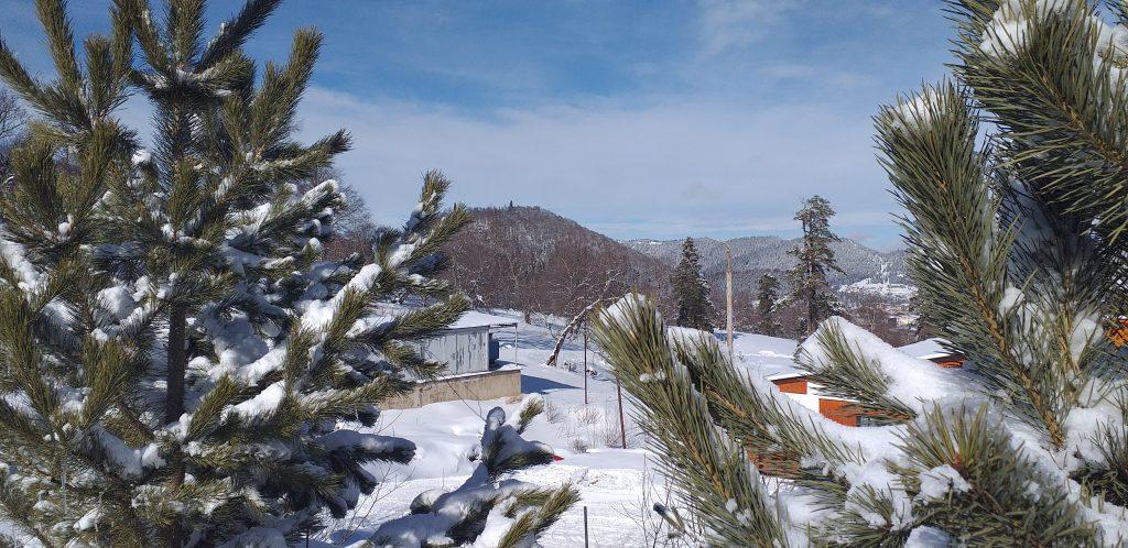 горы и ели в Бакуриани