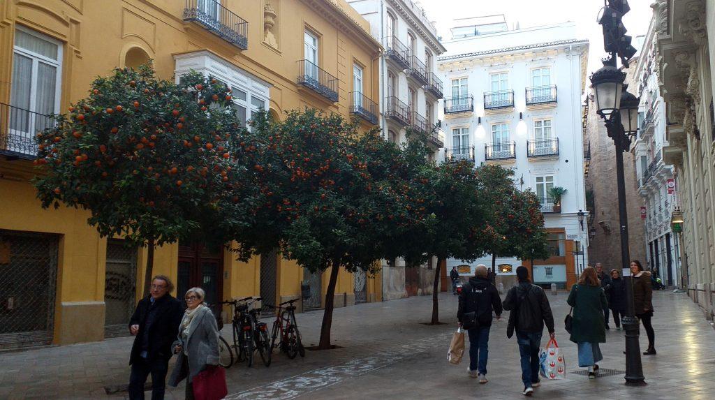 апельсиновые деревья на улицах Валенсии