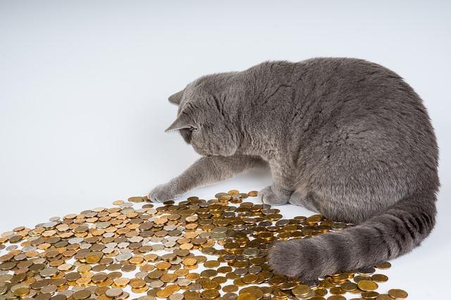 металлические деньги и кот
