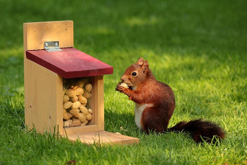 арахис в кормушке для белки