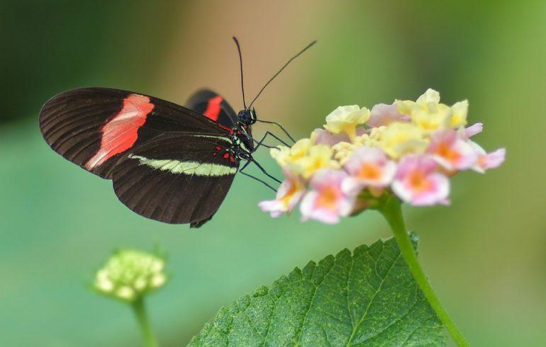 Жизнь насекомых: бабочка