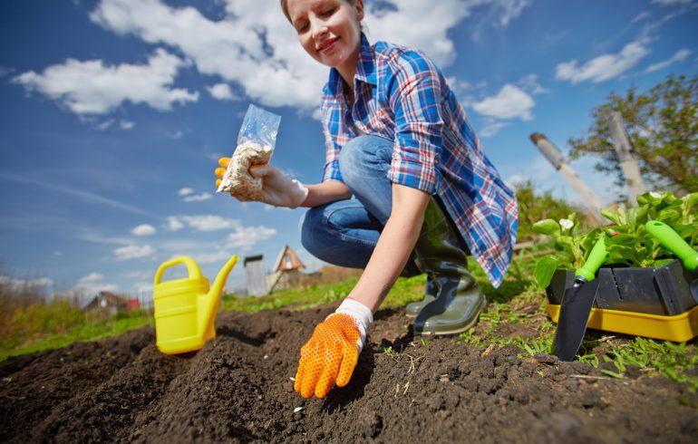 Посев грядок весной