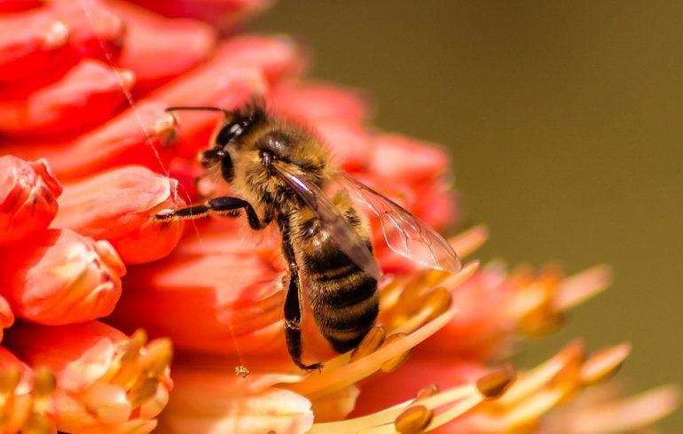 отмечаем День пчел