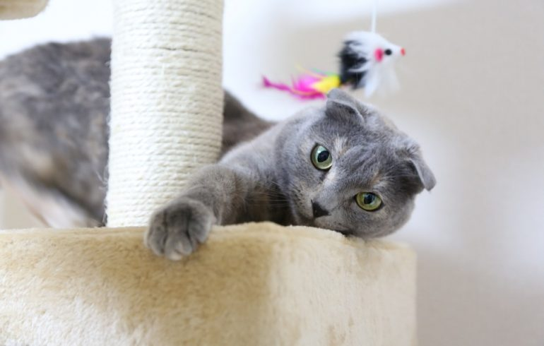 Ушки на макушке: вислоухая кошка в вашем доме