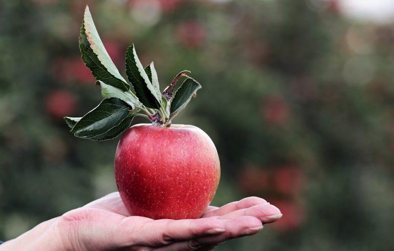 Яблоко на ужин, и врач не нужен