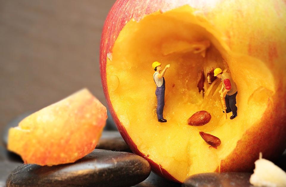 яблочные семечки в плоде яблока