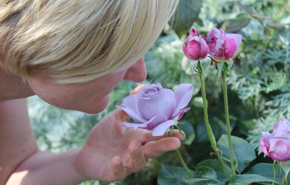 бутон розы и лицо женщины